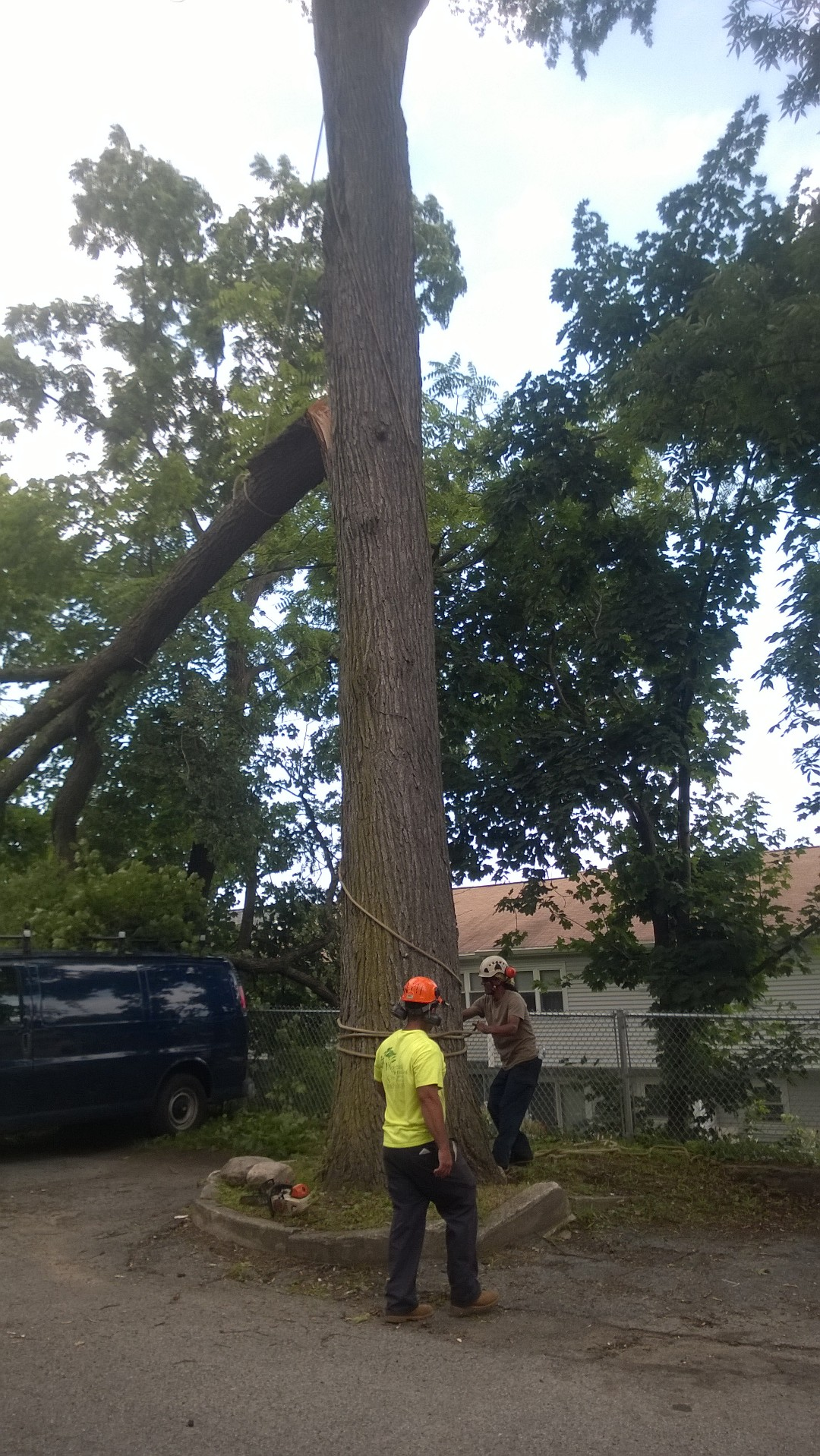 Tree Care WP_20150630_010
