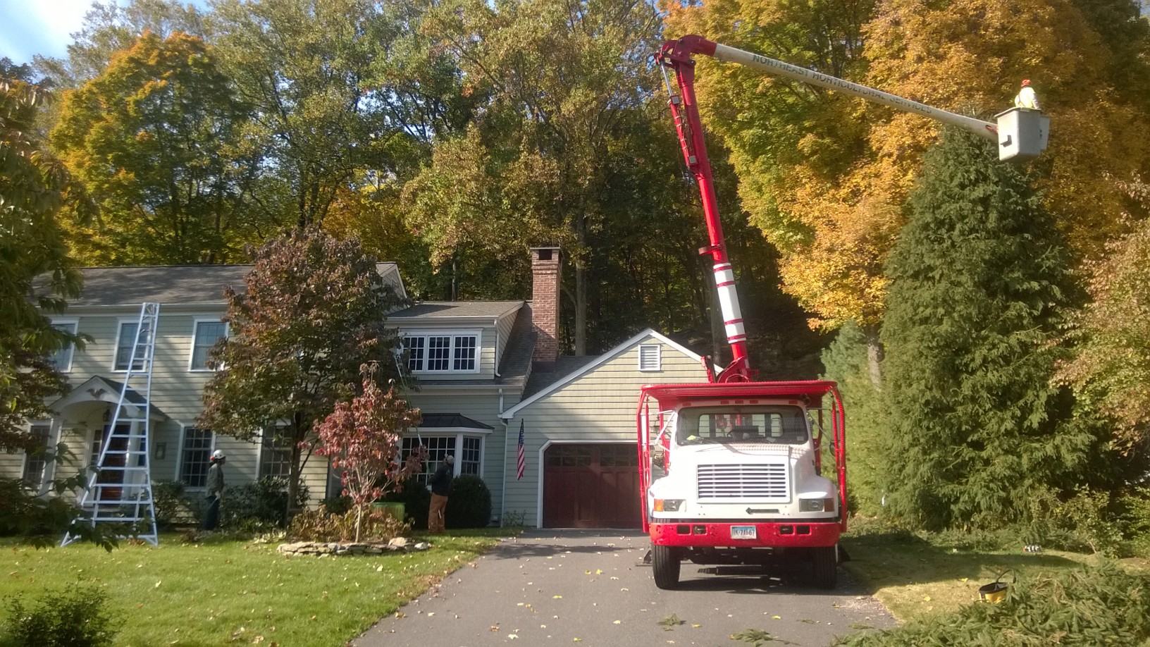 Tree Care WP_20151021_006