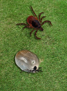 Organic Insect and Tick Control