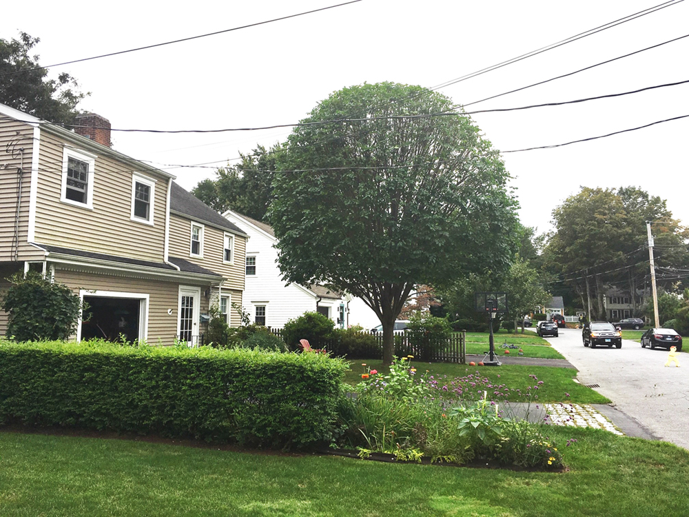 Tree Pruning After